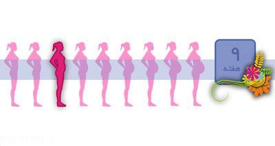 اوضاع مادر و جنین در هفته نهم بارداری