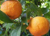 بهترین خواص میوه نارنج و پوست آن را بدانید