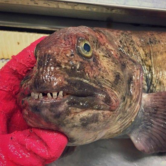 عجیب ترین و ترسناک ترین موجودات دریایی