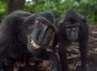 حرکات خنده دار میمون ها جلوی دوربین