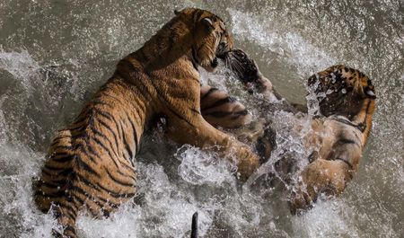حیوانات هوشمند و عاقبت کره زمین