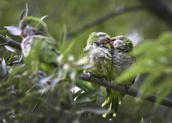 عکس های خنده دار و باحال حیوانات (9)