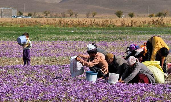 سفر به جیرفت شهر رویاهای ایران زمین
