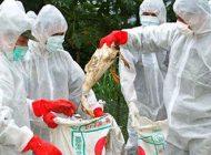 گسترش آنفولانزای مرغی در تهران