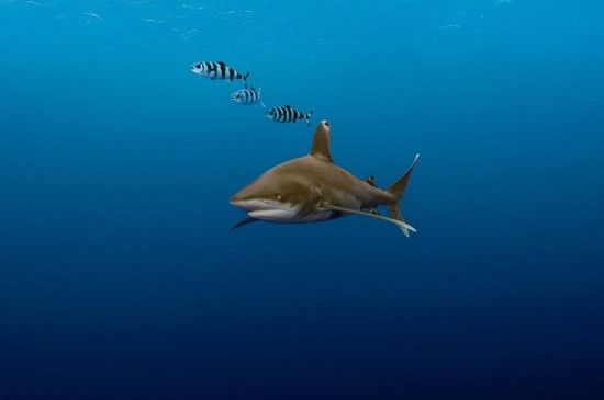 برترین تصاویر زیر آبی منتخب نشنال جئوگرافیک 2016