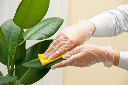 آموزش تمیز کردن گل های آپارتمانی