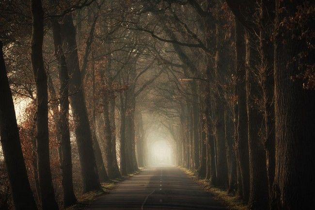 سفر به جنگل های جادویی و مسحور کننده هلند