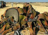 زشت ترین گیاه روی کره زمین را بشناسید