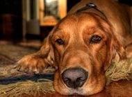آیا نگهداری حیوانات خانگی موجب آزار آن ها است؟