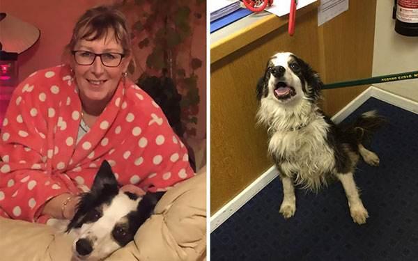 سگی که 2 ماه برای پیدا کردن صاحبش دوید