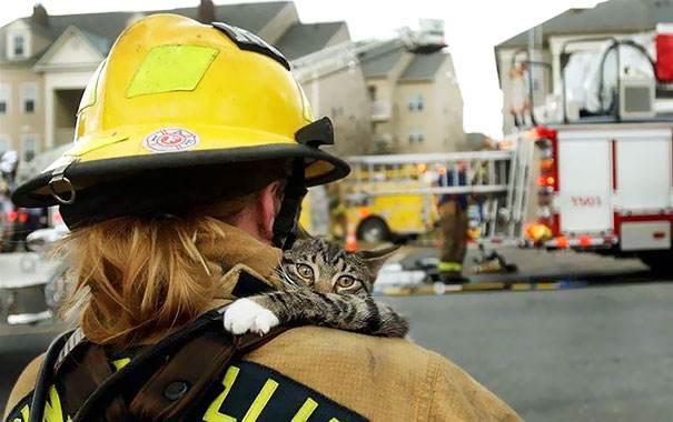 تصاویر تاثیرگذار آتش نشان ها در حال کمک به حیوانات