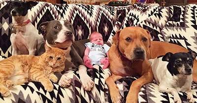دوستی عجیب این حیوانات با نوزاد تازه به دنیا آمده