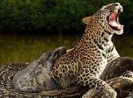 بزرگترین مار آناکوندای جهان کشته شد