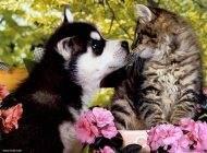 هوش گربه ها درست به اندازه سگ ها است