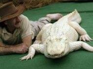 تمساح نادر و دیدنی با پوست کاملا سفید رنگ