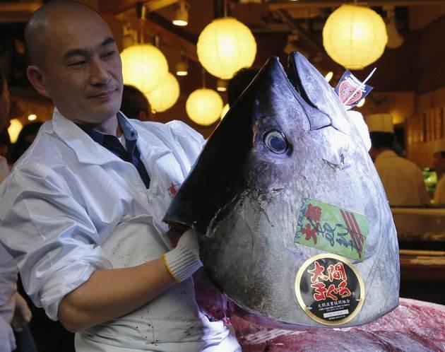 این ماهی تن دو میلیارد تومان قیمت دارد