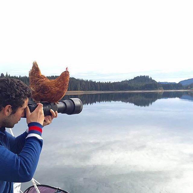مرغی که با صاحب خود جهانگردی می کند