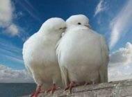 ازدواج هشیارانه و اطمینان از زندگی موفقیت آمیز