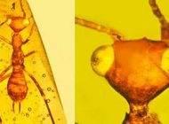 حشره فرازمینی در قالب کهربای فسیل کشف شد