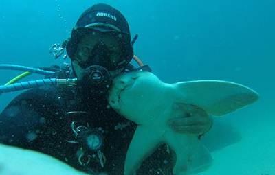 دوستی جالب این مرد با یک کوسه در دریاها