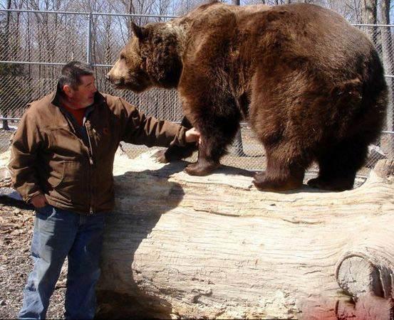 زندگی جالب زن و شوهر با خرس 600 کیلویی