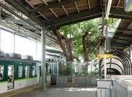 داخل این ایستگاه قطار یک درخت 700 ساله است