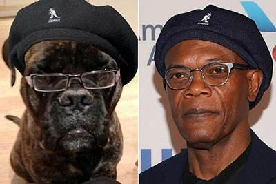 شباهت عجیب این سگ ها به بازیگران هالیوودی