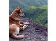ریشه و داستان ضرب المثل مثل سگ پشیمان است
