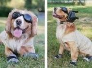 لباس جالب سگ های نظامی آمریکا در افغانستان