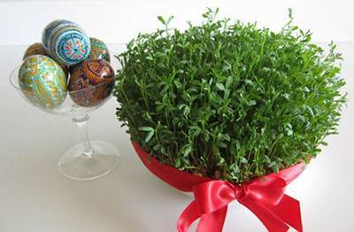 روش کاشت انواع سبزه برای عید نوروز 1398