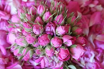 خاصیت های مفید گل سرخ برای پوست و مو