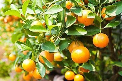 فواید مصرف آبلیمو و آب نارنج همراه با غذا