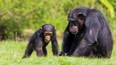 باارزش ترین حیوانات دست آموز خانگی دنیا