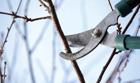 آموزش هرس کردن درختان در اسفند ماه