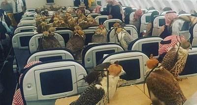 شاهزاده سعودی برای انتقال شاهین هواپیما دربست گرفت