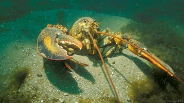 این جانداران هرگز نمی میرند و تا ابد زنده هستند