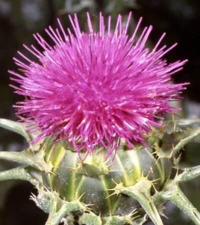 گیاهان دارویی برای جلوگیری از سرطان پوست