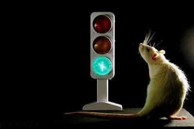 کارکرد مغز شبیه به چراغ راهنمایی است