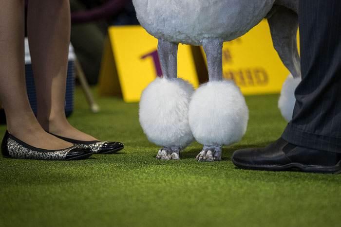 سگ های بانمک  در جشنواره وست مینستر 2017