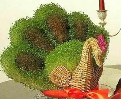 روش کاشت سبزه زیبای عید به شکل طاووس