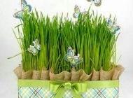 بهترین موعد برای کاشت سبزه عید