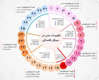 شرح کامل سیکل قاعدگی و دوران پریود