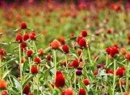 درمان های قطعی برای درمان آلرژی فصلی در بهار