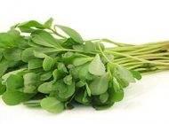 خواص مفید گیاه دارویی خرفه را بشناسید