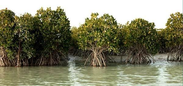 سفر به جزیره رویایی قشم و معرفی جاذبه های گردشگری
