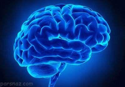 تاثیرات مغز انسان در ملاک های دوست شدن با افراد