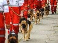 سگ های باوفا نجات دهندگان جان انسان ها