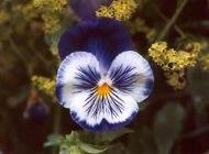 روش کاشت مشهورترین گل های بهاری زیبا
