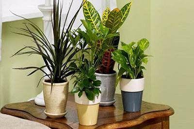 تاثیر گیاهان آپارتمانی در خواب راحت شبانه