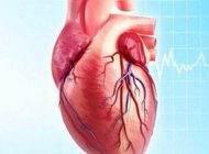 رابطه شکل اندام انسان و سلامت قلب